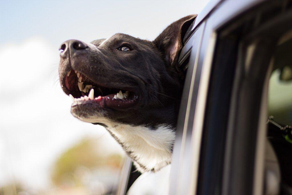 Quitar los pelos de perro en el coche