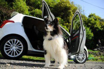quitar-pelos-perro-vehículo