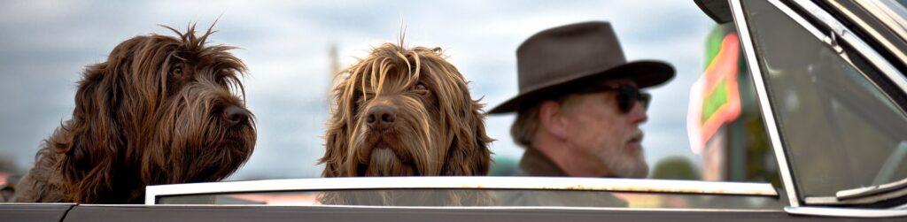 Viaja con tu perro en el coche de manera legal. ¡Te contamos cómo!